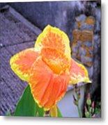 Saging Saging Tropical Flower Philippines Metal Print