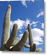 Saguaro Cacti  Metal Print