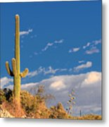Saguaro Cactus - Symbol Of The American West Metal Print
