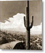 Saguaro Cactus 3 Metal Print