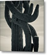 Saguaro Cactus Armed And Twisted Metal Print