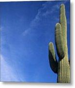 Saguaro Cactus H Metal Print