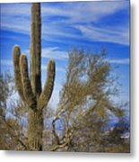 Saguaro Cactus Of The Desert Southwest Metal Print