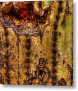 Saguaro Detail No. 18 Metal Print