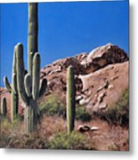 Saguaro National Monument Metal Print