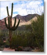 Saguaro National Park Metal Print