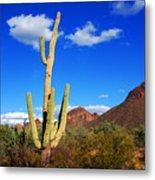 Saguaro Tree Metal Print