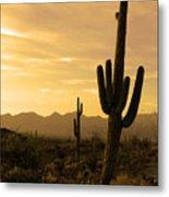Saguaros At Sunset Metal Print