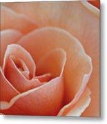 Sahara Light Tan Cream Rose Metal Print