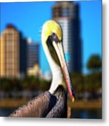 Saint Petersburg Pelican Metal Print