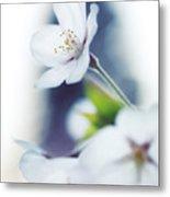 Sakura Cherry Blossom Flowers Metal Print