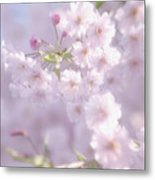 Sakura Trees Metal Print