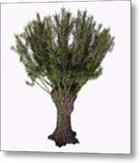 Salix Viminalis Tree Metal Print