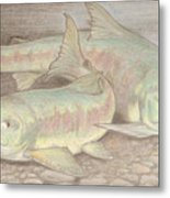 Salmon Spawn Metal Print