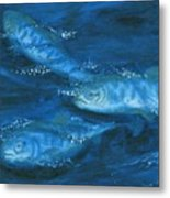 Salmon Swimming Metal Print
