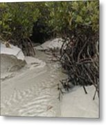 Saltwater Creek Metal Print
