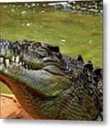 Saltwater Crocodile By Kaye Menner Metal Print