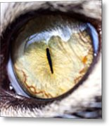 Sammy's Eye Metal Print