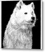 Samoyed Dog Metal Print