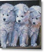Samoyed Pups Metal Print