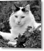 Sampson In Black And White Metal Print