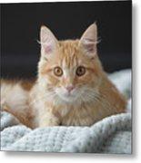Samson_speaks Kitten Years Metal Print