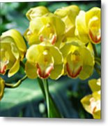 San Diego Yellow Orchids Metal Print