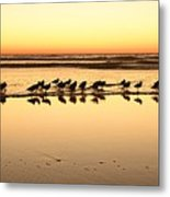 San Diego Shorebirds Metal Print