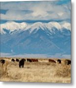 San Luis Valley And Cattle Metal Print