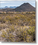 San Pedro Valley - One Day On Earth 2011-11-11 Metal Print