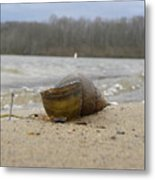 Sand And Shell Metal Print