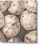 Sand Dollars Metal Print