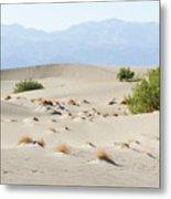 Sand Dunes Plants Hills Metal Print