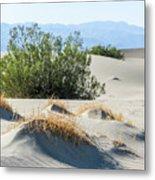 Sand Dunes, Plants, Mountains Metal Print