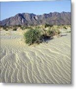 Sand Dunes & San Ysidro Mountains At El Metal Print