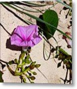 Sand Flowers Metal Print