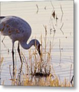 Sand Hill On The Shores Metal Print