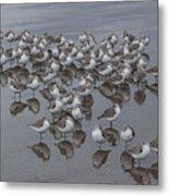Sanderlings On The Shore Metal Print