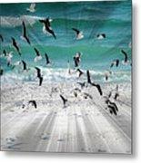 Sandestin Seagulls C Metal Print