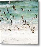 Sandestin Seagulls D Metal Print