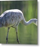 Sandhill And Green Pond Metal Print