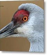 Sandhill Crane 6 Metal Print