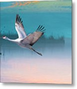 Sandhill Crane And Misty Marshes Metal Print