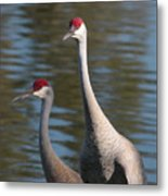 Sandhill Crane Couple By The Pond Metal Print