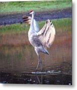 Sandhill Crane Painted Metal Print