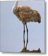 Sandhill Crane Posing Metal Print