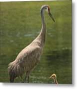 Sandhill Crane With Baby Chick Metal Print