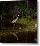 Sandhill Cranes And Chicks Metal Print