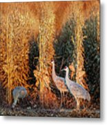 Sandhill Cranes At Sunrise Metal Print
