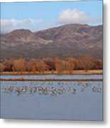 Sandhill Cranes Beneath The Mountains Of New Mexico Metal Print